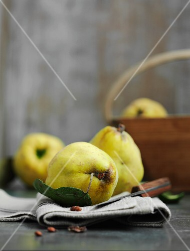 Quinces with leaves on a linen cloth with a knife