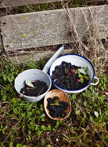 Fresh blackberries in bowls and a sieve in a garden