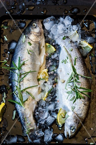 Two fresh trout with rosemary, lemons and ice