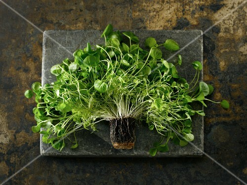 Fresh cress and roots on a piece of natural stone