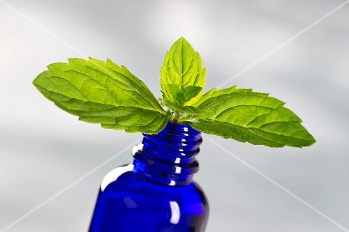 Peppermint leaves in a blue bottle of peppermint oil