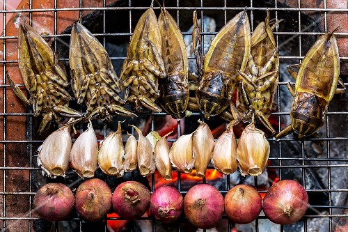 Giant water beetles, garlic and onions on a barbecue, Laos