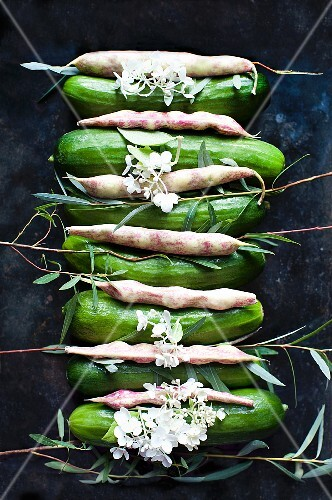 A row of cucumbers and pinto beans with flowers