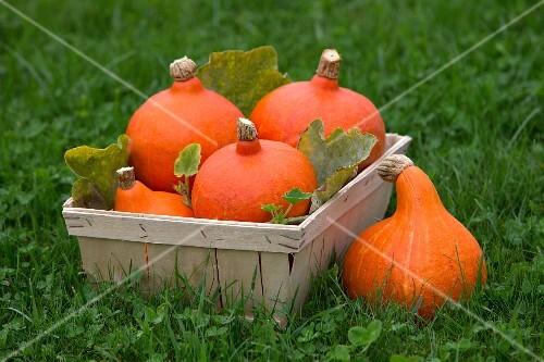 Pumpkins in a wooden basket in a meadow