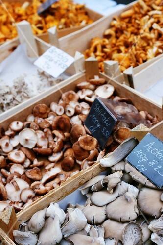 Various mushrooms in crates at a market