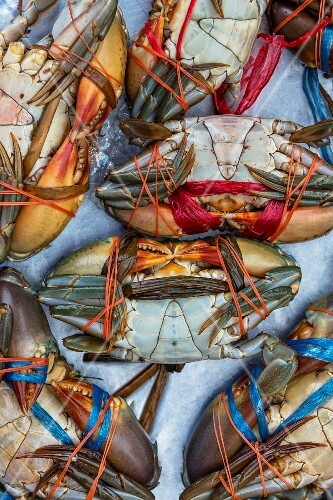 Fresh crabs at a market (Chanthaburi, Thailand)