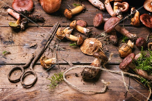 Fred wild mushrooms with an old pair of scissors on a wooden table