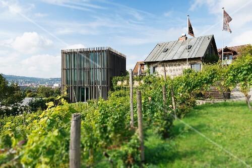 Weingut am Stein, Würzburg