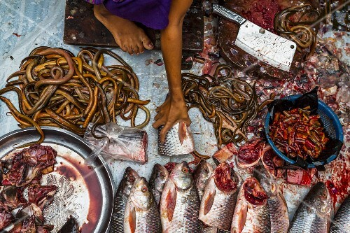 A fish stall at the market in Yangon, Myanmar