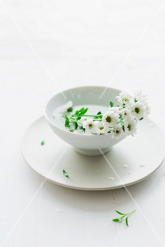 Daisies in a bowl of water