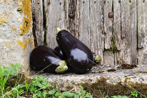 Aubergines in front of an old wooden door