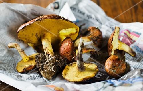 Fresh porcini mushrooms on a piece of newspaper
