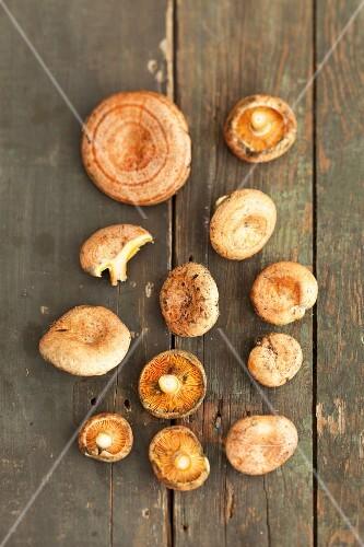 Red pine mushrooms (lactarius deliciosus)