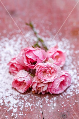Pink roses with icing sugar