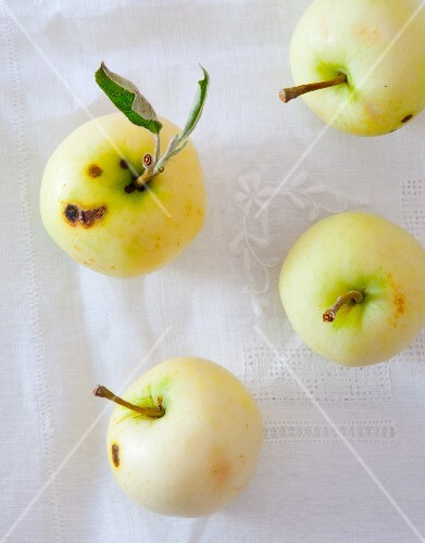 For Whites Transparent apples with stems and a leaf