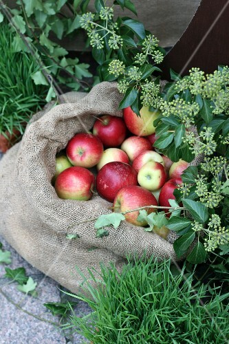 A sack of apples outside