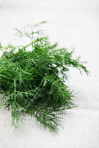 Fresh dill on a white surface