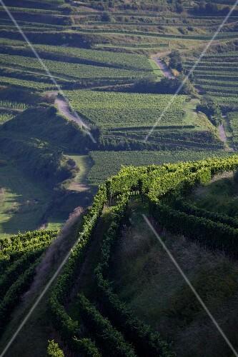 A view over vineyards near Oberbergen, Kaiserstuhl