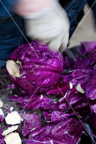 A red cabbage with the outer leaves cut off