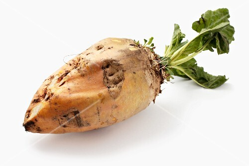 A forage beet