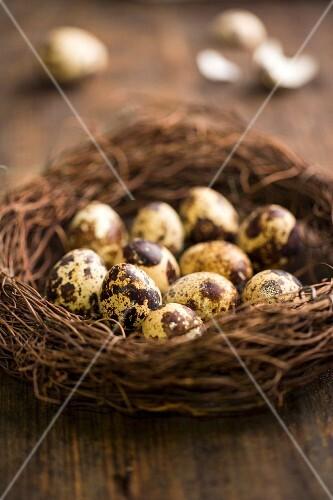 Quail's eggs in nest