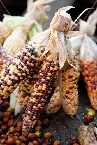Burmese corn cobs