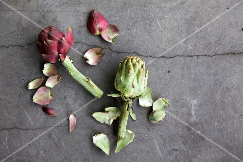 Two artichokes with torn-off leaves