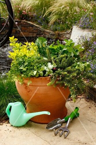 An earthenware pot planted with decorative green plants