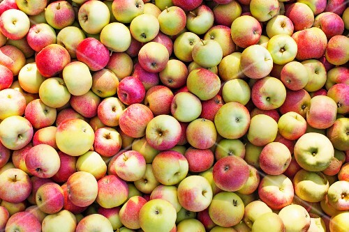 Freshly harvested apples (seen from above)