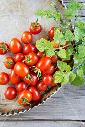 Cherry tomatoes and plum tomatoes with leaves