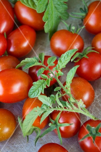 Cherry tomatoes and plum tomatoes with leaves (close-up)