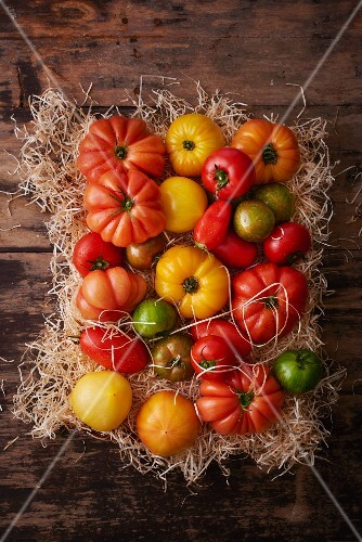 Various types of tomatoes on straw