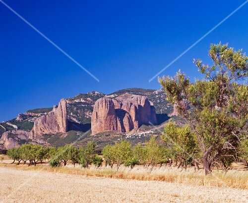 An almond tree plantation at the foot of the imposing rock pillars, Mallos de Riglos, Aragon, Spain