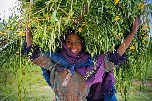 Mädchen aus dem äthiopischen Hochland mit einem Bündel frisch geschnittenem Weizen und Meskel-Blumen auf dem Kopf; Äthiopien, Afrika