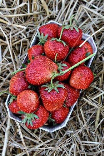 Fresh strawberries in a paper punnet in straw