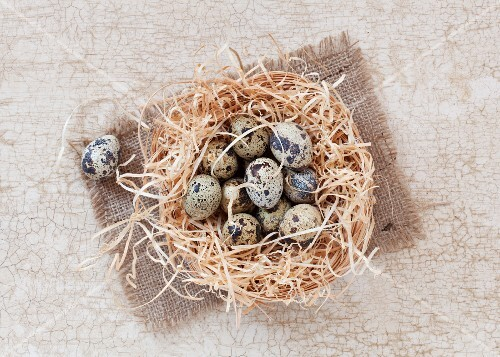 Quail's eggs in straw