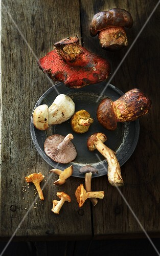 Various fresh mushrooms on a plate and on a wooden surface