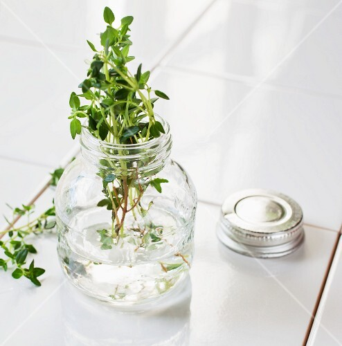 Fresh lemon thyme in a glass of water