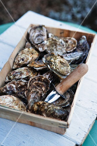 Fresh marennes oyster in a crate (France)