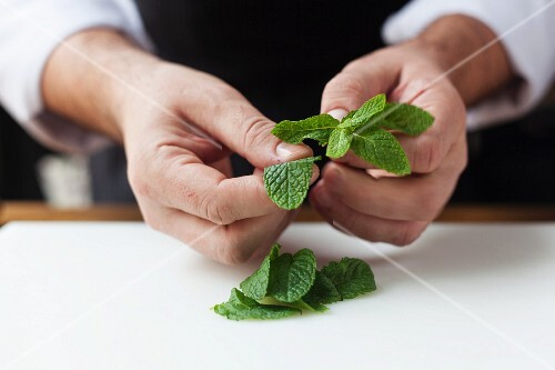 Mint leaves being picked off a stem