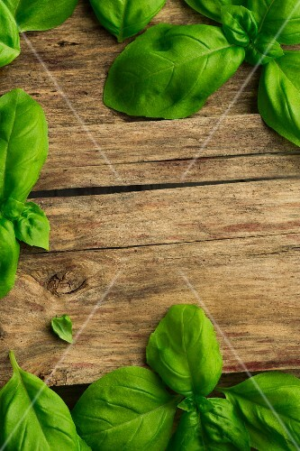Fresh basil on a wooden surface