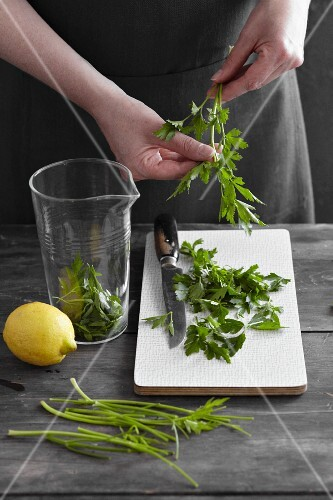 Parsley being prepared for parsley oil