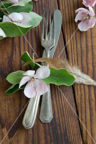 Silver cutlery, quince flower and feather
