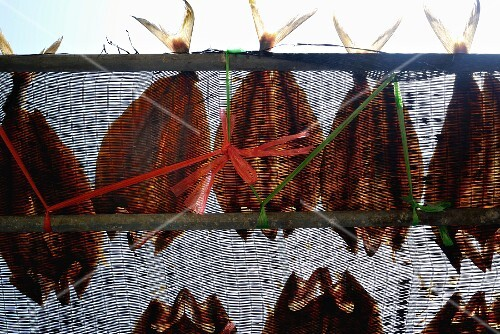 Fish hanging to dry on nets