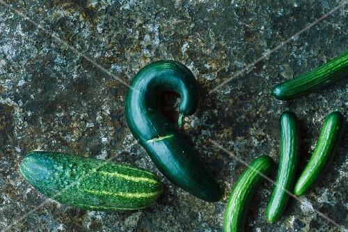 Various types of cucumber