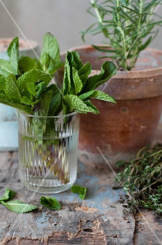 An arrangement of fresh mint in a glass and rosemary in a terracotta pot
