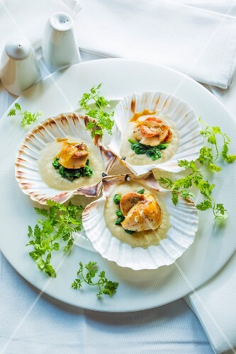Scallops on a bed of celery purée with spinach