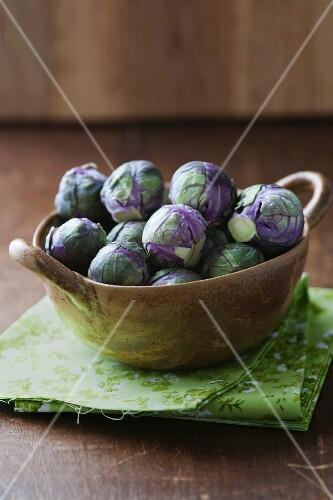 Purple Redarling Brussels sprouts
