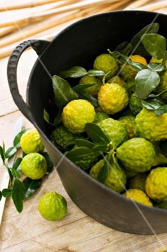 Kaffir limes in a bucket