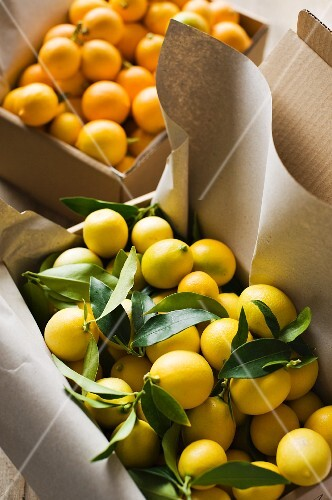 Citrus fruit in paper cartons